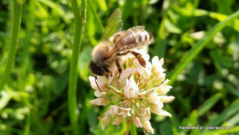 Pracowite pszczoły