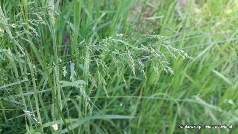 Różnorodność roślin na łące